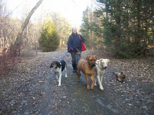 Relaxed Home-based Boarding and Daycare For Your Dog Kawartha Lakes Peterborough Area image 6
