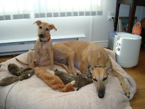 Paws Awhile Dog Sitting Services - We sit while you play!