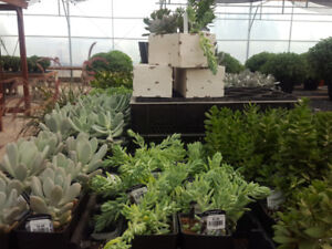 Succulents - 25% OFF