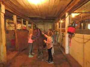 March break horse riding camp limited spaces