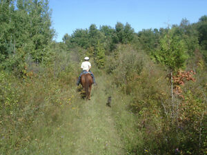 Wonderful Boarding for Trail Riders or Retirees Stratford Kitchener Area image 2