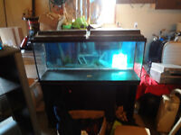 LARGE 55 gallon aquarium