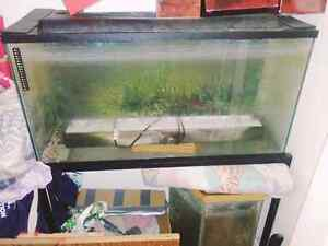 2 fish tanks need gone asap ... Anyone can help?