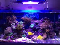 V2 illumenair Aquaruim marine light