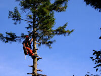 Very Experienced Tree Removal Crew
