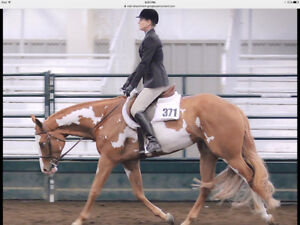 Exceptional Hunt Seat Mare