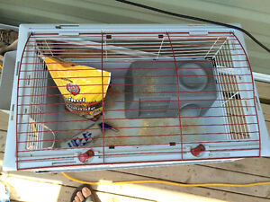 Guinea Pig Cage, Accessories and food