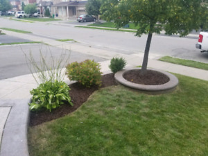 General landscaping, grass, weeds, overgrown, clean up ect.