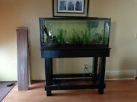 50 Gallon Hagen Fishtank and Stand