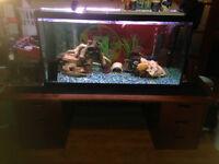 Aquarium / Fish tank 55/75/120 gal faite vite ces pas cher! nego