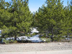 ACREAGE PACKAGE  (2 LOTS) Williams Lake Cariboo Area image 8