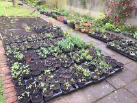 Garden plants for sale