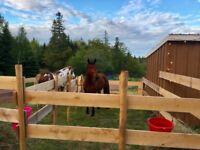 Cowgirl/ boy  Overnight Horseback Summer Adventures! Age 9 +