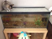 3ft Tank and Fish