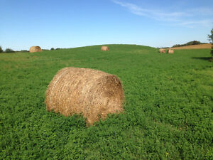 Hey! Hey! Hay for sale