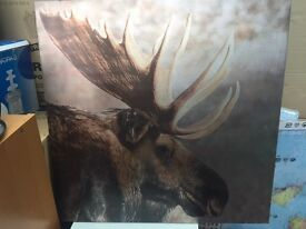 Canvas pictures of Moose and Owl