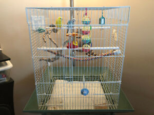 Two beautiful and friendly budgies looking for a new home!