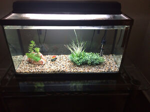 Fish Tank 25 Gallon/Guppies