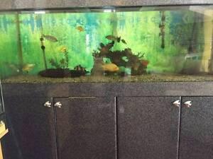Large Fresh Water Tropical Aquarium Fish Tank Bundall Gold Coast City Preview