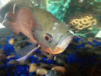 35 g avec 2 gros poissons