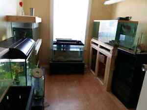 Entire fish tank set up must go!