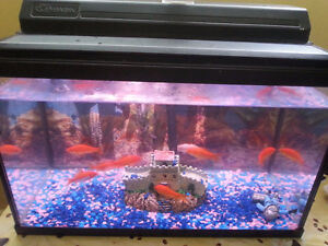 fish tank with all fish and accesory