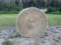 Horse hay for sale.