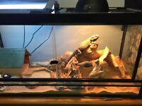 Lizard terrarium (86 gallon) for sale