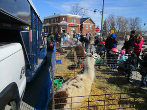 Mobile Petting Zoo for Birthdays/Seniors homes/Special events Peterborough Peterborough Area image 3