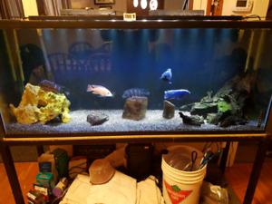 Complete 125 gallon fish tank