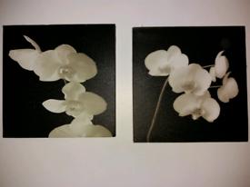 Canvas Floral Square Prints