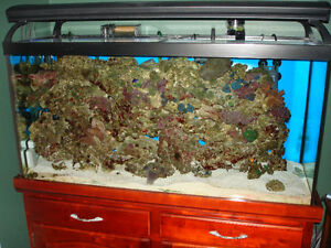 PARTING OUT 90 GALLON TANK AND STAND WITH LIVE ROCK AND MISC.