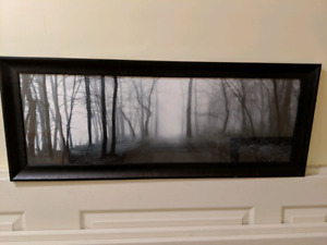 Accent Art - Moody Forest Photograph