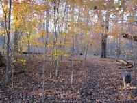 Grand Bend Lot for Sale