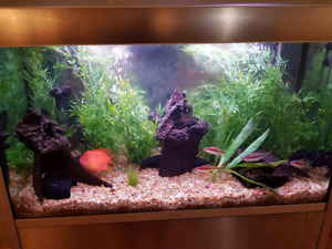 Fish Tank for the Hospice