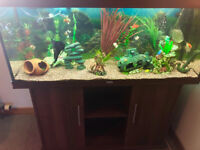 Juwel Rio 240l Aquarium Tropical Setup External Filter