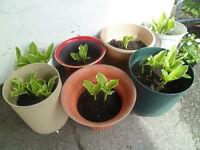 Plantes vertes  selon photos