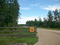 Horse Boarding Available Southeast of Steinbach