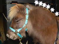Lessons with Miniature Horses