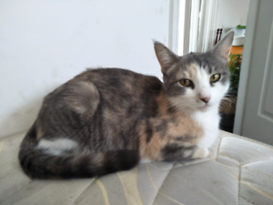 Beautiful cat looking for loving home