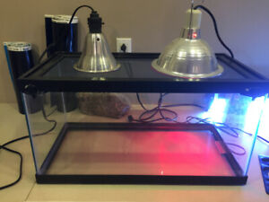 Gecko Aquarium Kijiji In Toronto Gta Buy Sell Save With