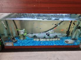 Fish tank 100l full set up