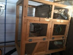free 2 female rabbits and new cage