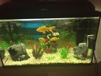 Cold water fish tank set up