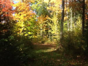 Country home in Irondale for private sale Kawartha Lakes Peterborough Area image 4