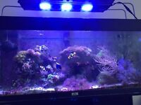 Mature marine tank with fish and corals