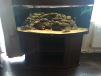 Juwel Vision 450 Full Set Up Fish Tank with Fluval FX5