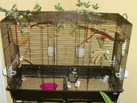 cage and two finches