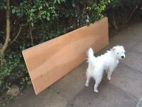 Two sheets 12mm plywood, 200x60, free! Dog not included