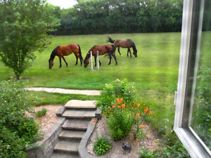 Country Suite, 3k South, with Horse boarding
